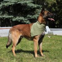 Фотография товара Косынка охлаждающая для собак Osso Fashion XL