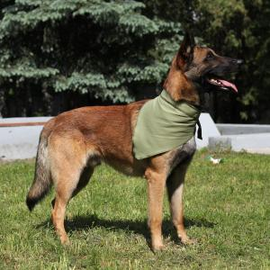 Охлаждающая косынка для собак Osso Fashion XL