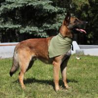 Фотография товара Охлаждающая косынка для собак Osso Fashion XL