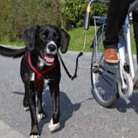 Фотография товара Велоспрингер для собак Trixie Biker-Set, черный
