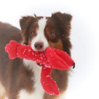 Фотография товара Игрушка для собак Osso Fashion