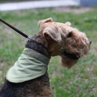Фотография товара Косынка охлаждающая для собак Osso Fashion L