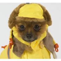Фотография товара Шапка для собак Тузик 9329, размер 1, 100 г