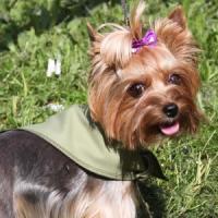 Фотография товара Охлаждающая косынка для собак Osso Fashion S