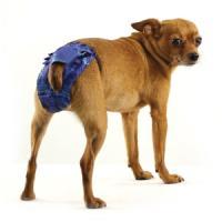 Фотография товара Трусы для собак Гамма