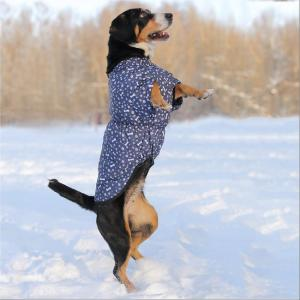 Жилет для собак Osso Fashion, размер 70
